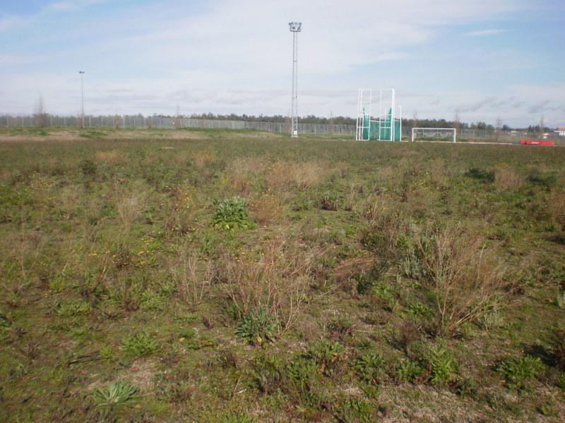 Rehabilitación de espacios verdes y terrenos deportivos abandonados