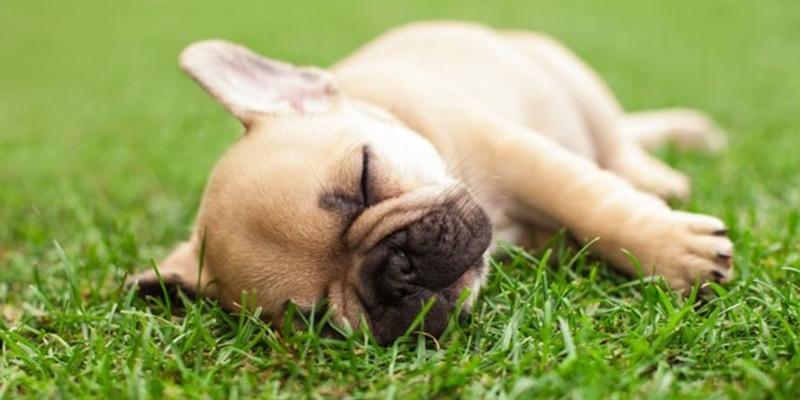 Compatibilidad del césped artificial y sus mascotas