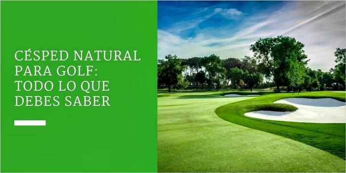 Césped natural para golf: todo lo que debes saber