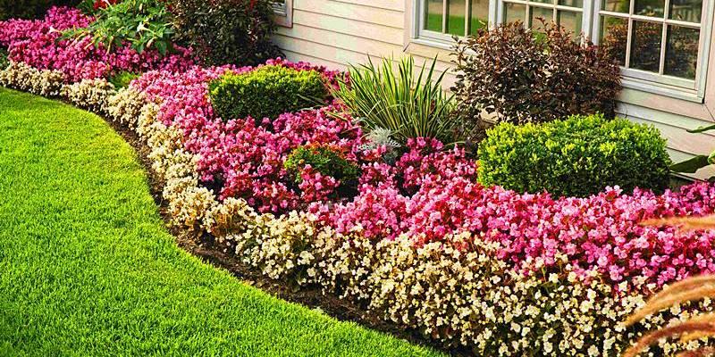 Pasos para obtener un magnífico jardín