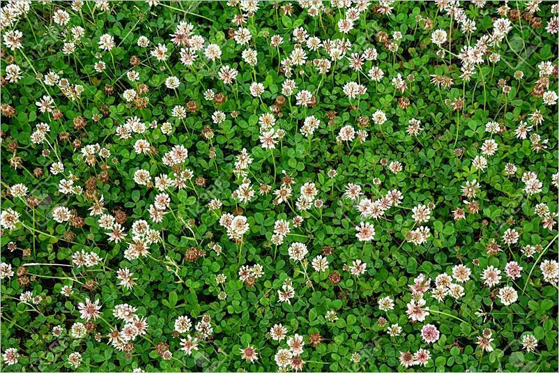 Alternativas al césped natural para jardines